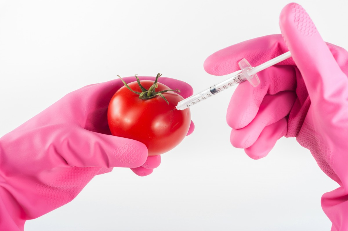 modified tomato genetically food injection genetic syringe science by.PIXHere.790954